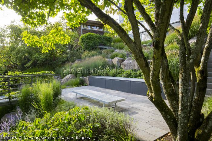 Multi-stemmed tree, contemporary bench on stone patio, contemporary basalt rock garden, Panicum virgatum 'Heavy Metal'