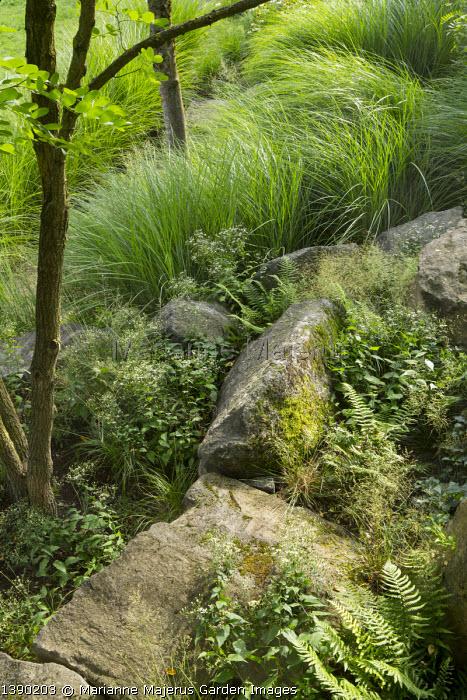 Large basalt rocks in sloping rockery, Eurybia divaricata syn. Aster divaricatus 'Beth Chatto', Miscanthus sinensis 'Gracillimus'