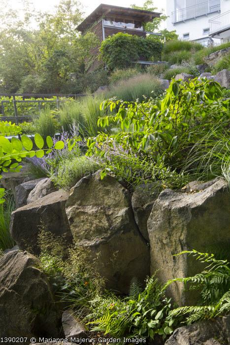 Viburnum plicatum 'Mariesii' in rockery, large basalt rocks