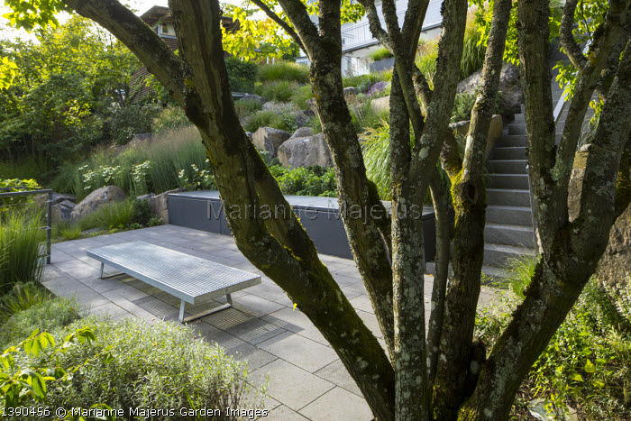 View through multi-stemmed tree, contemporary bench on stone patio, contemporary rock garden