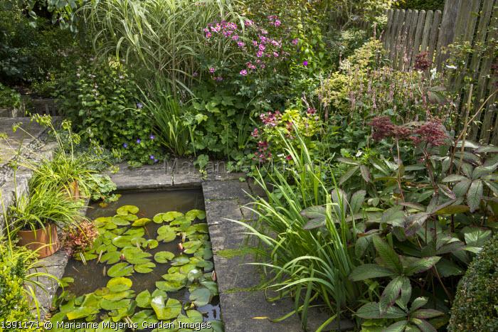 Rectangular water lily pond, Anemone hupehensis, hydrangea, Rodgersia pinnata, Persicaria amplexicaulis 'Rosea'