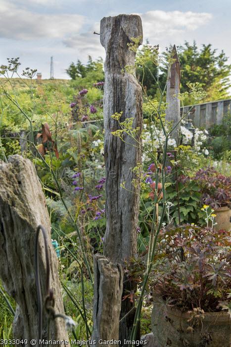 Foeniculum vulgare by salvaged wooden breakwaters, Geranium pratense 'Black Beauty'