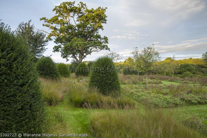Mown grass paths through Molinia caerulea subsp. caerulea 'Heidebraut' meadow, yew topiary, oak tree