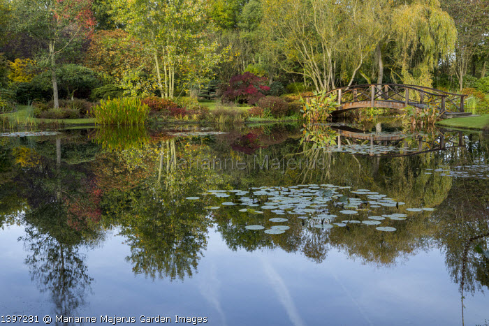 View across water lily pond, wooden bridge