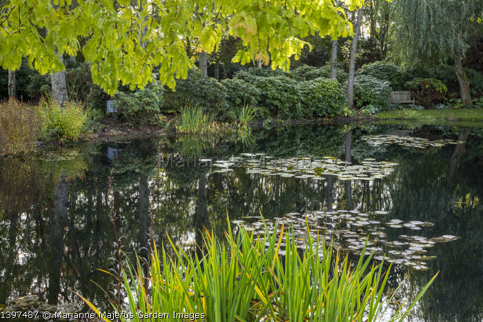 View across water lily pond