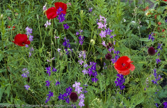 Poppies, larkspur, alliums