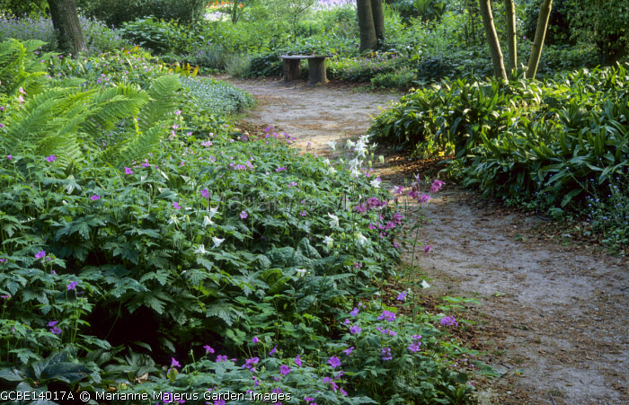 Path through woodland garden leading to rustic bench