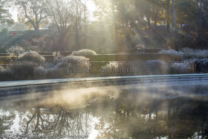 Mist rising over lake, reflections, beech hedges, Miscanthus sinensis, monochrome