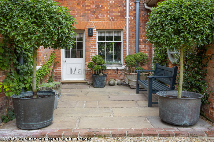Prunus lusitanica in large copper containers on stone patio, wooden bench