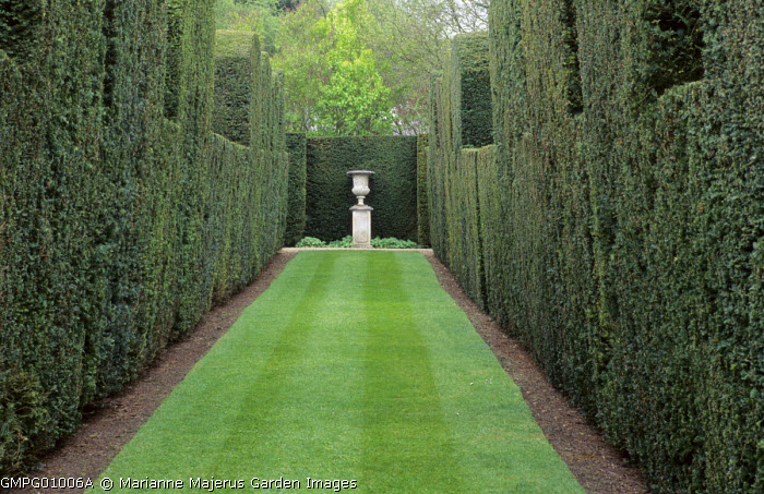 Yew hedges, view to urn