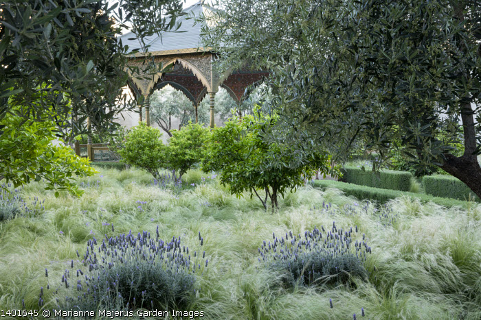 Lavender and lemon trees in a carpet of Stipa tenuissima, ornate arbour, olive trees