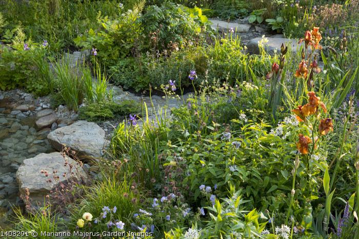 Rocks in stream, Iris 'Carnival Time', Geranium pratense 'Mrs Kendall Clark', Amsonia illustris, Geum rivale