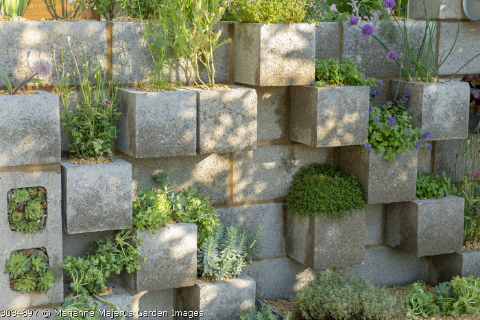 Breeze block wall with herbs and succulents