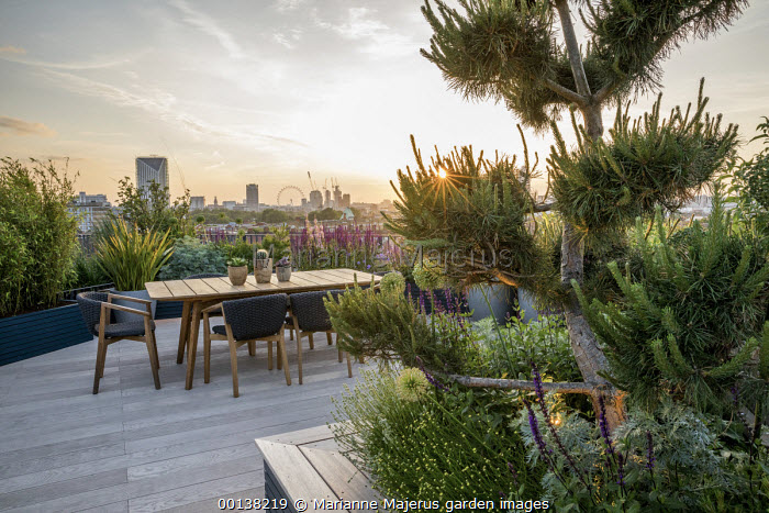 Table and chairs by Patrick Norguet on London roof terrace, Salvia nemorosa 'Caradonna' in raised beds, cloud-pruned Pinus nigra, Santolina rosmarinifolia subsp. rosmarinifolia 'Primrose Gem'