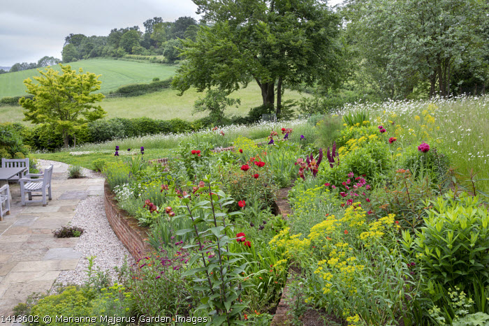 Terraced border, Papaver orientale (Goliath Group) 'Beauty of Livermere' and 'Harlem', Euphorbia oblongata, Euphorbia griffithii 'Dixter', Iris 'Quechee', Lupinus 'Masterpiece',  Euphorbia seguieriana subsp. niciciana, brick walls, table and chairs on stone patio