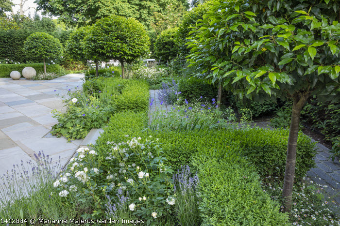 Prunus lusitanica 'Angustifolia' standard lollipop trees, low clipped box hedges, stone paving, Lavandula angustifolia 'Munstead', astrantia, roses, geranium
