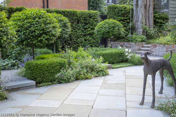 Prunus lusitanica 'Angustifolia' standard lollipop trees, low clipped box hedges, bronze dog statue, York stone paving, geraniums
