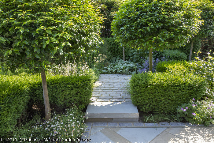 Prunus lusitanica 'Angustifolia' standard lollipop trees, low clipped box hedges, geraniums, York stone and granite sett paving, Erigeron karvinskianus