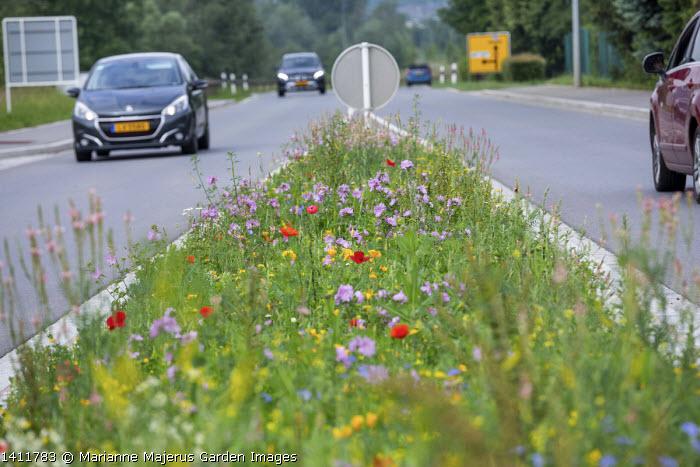 Wildflower meadow by roadside including malva, Papaver rhoeas, Melilotus officinalis and Eschscholzia californica, cars