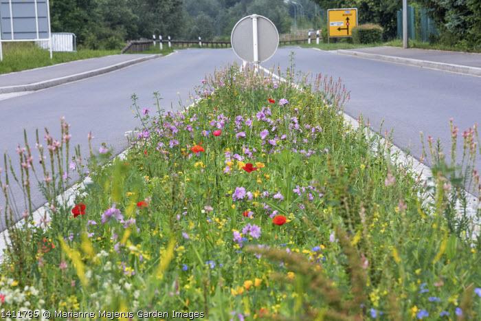 Wildflower meadow by roadside including malva, Papaver rhoeas, Melilotus officinalis and Eschscholzia californica