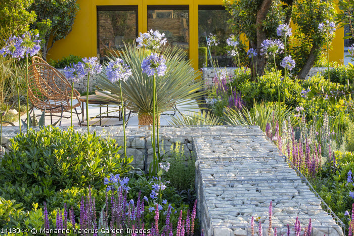 Stone-filled gabion wall, Agapanthus 'Blue Storm', yellow painted wall, Yucca rostrata 'Blue Swan', chairs on stone terrace, Salvia nemorosa 'Ostfriesland', Pittosporum tobira 'Nanum'