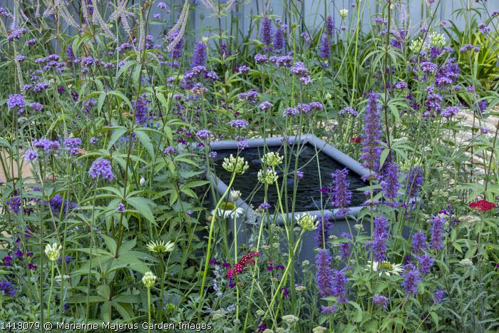 Raised trough in border, Verbena bonariensis, agapanthus, veronicastrum, salvia