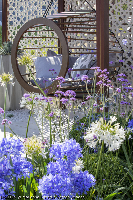 Hanging chair with cushions in pavilion, Verbena bonariensis, agapanthus