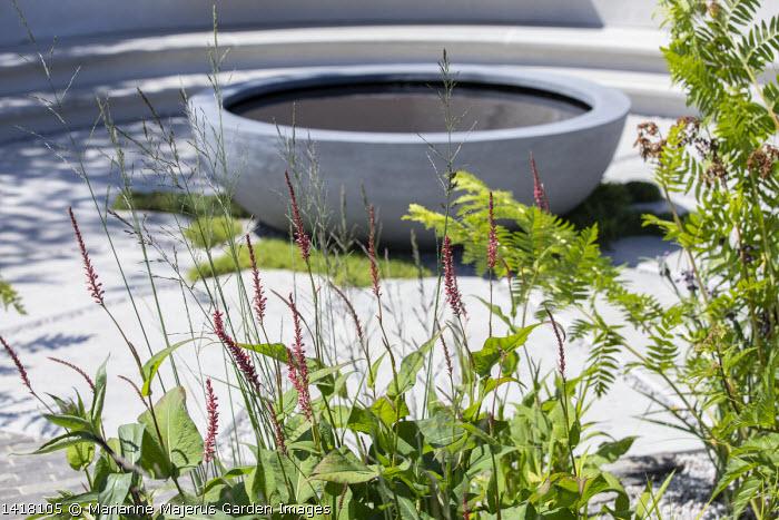 Circular raised pond on patio, Persicaria amplexicaulis, Osmunda regalis
