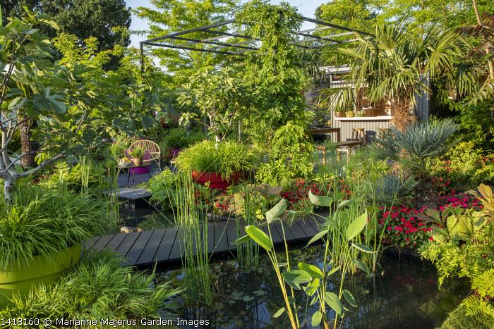 Black bridge across pond and pergola, Hakonechloa macra, Cyperus papyrus, Imara Bizzie Lizzies, Ficus carica, chair on terrace