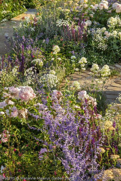 Rosa 'Gentle Hermione', Perovskia 'Blue Spire', Ammi majus, Centranthus ruber 'Albus', Salvia nemorosa 'Caradonna'