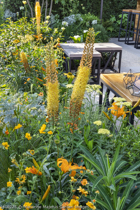 Geum 'Totally Tangerine', eremurus, Achillea 'Credo', Hemerocallis 'Burning Daylight', stools on terrace