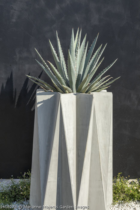Agave in tall contemporary container against black wall