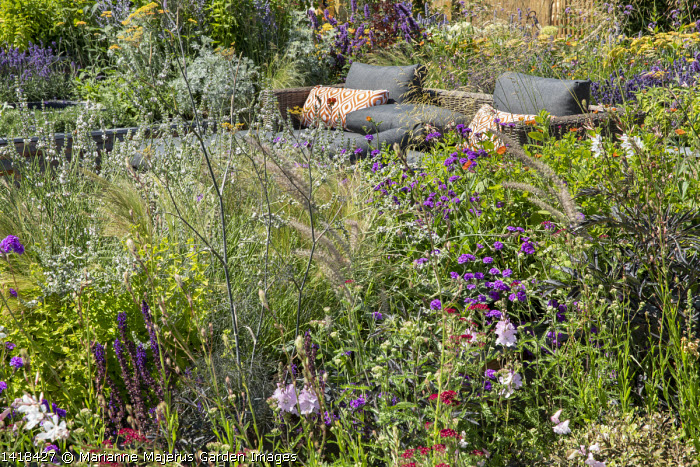 Foeniculum vulgare 'Giant Bronze', Lavandula x intermedia 'Edelweiss', Verbena rigida, outdoors sofa with cushions