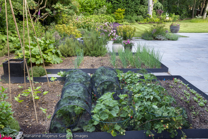 Kitchen garden, strawberries under mesh plant protection, onions, stone paving, rosemary, rhubarb
