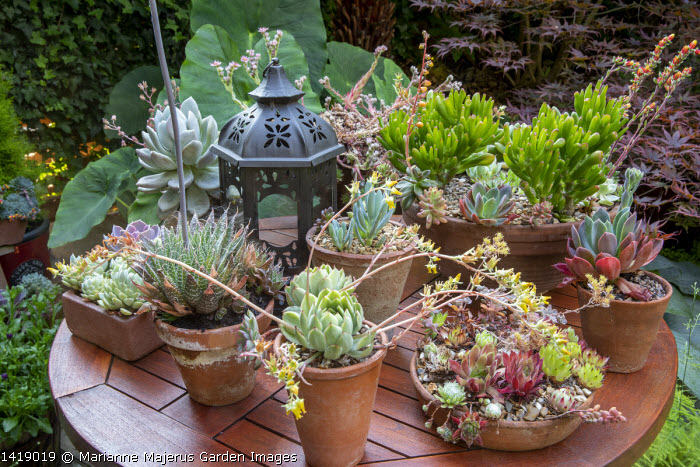 Collection of succulents in pots on table