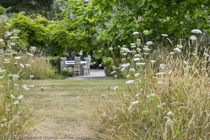 View from long grass meadow towards wooden table and chairs on patio, Catalpa bignonioides
