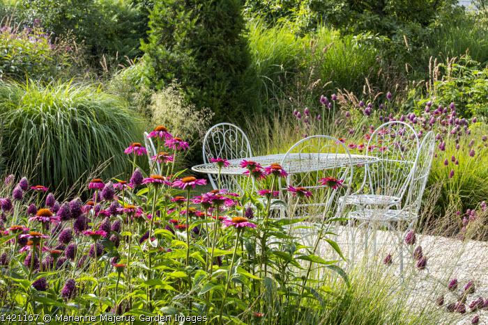 Wire table and chairs on gravel terrace, Allium sphaerocephalon, Echinacea purpurea 'Fatal Attraction', Molinia caerulea subsp. caerulea 'Heidebraut', Miscanthus sinensis 'Yakushima Dwarf', Taxus baccata column