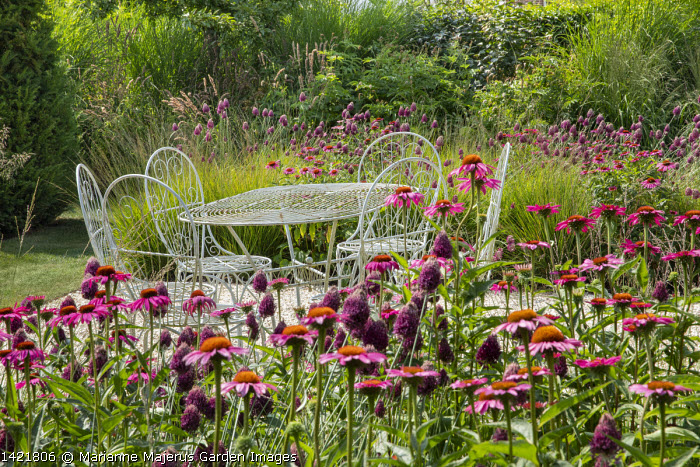 Wire table and chairs on gravel terrace, Allium sphaerocephalon, Echinacea purpurea 'Fatal Attraction', Molinia caerulea subsp. caerulea 'Heidebraut'