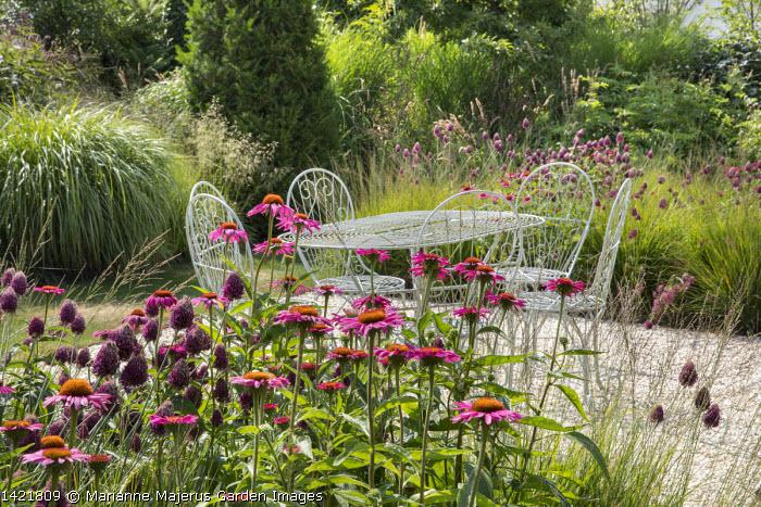 Wire table and chairs on gravel terrace, Allium sphaerocephalon, Echinacea purpurea 'Fatal Attraction', Molinia caerulea subsp. caerulea 'Heidebraut', Miscanthus sinensis 'Yakushima Dwarf'