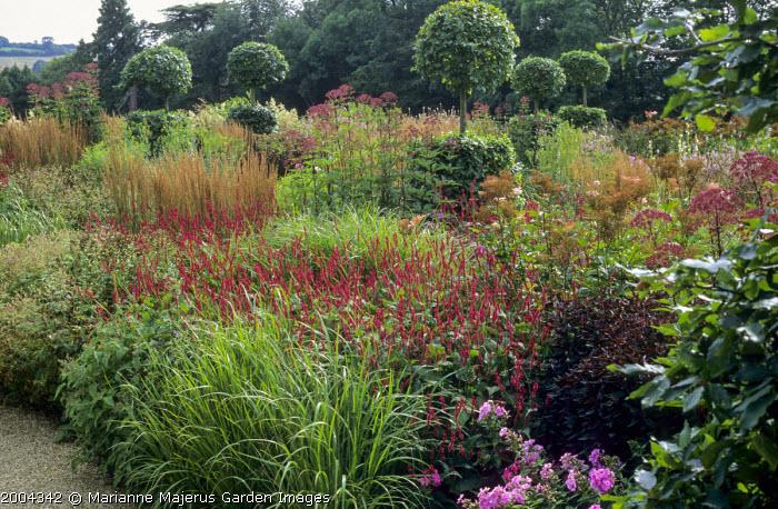 Perennial meadow, Persicaria amplexicaulis, eupatorium, grasses