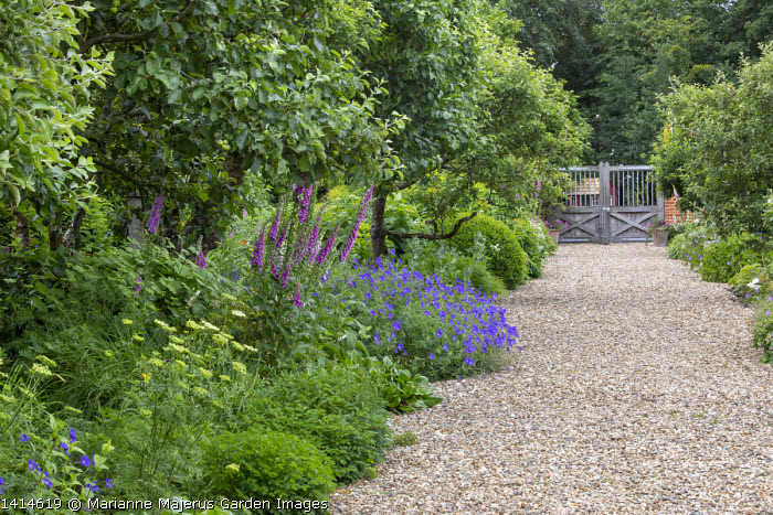 Wide gravel path leading to wooden gate, foxgloves, apple trees, geraniums