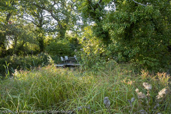 Chairs on decking overhanging pond, oak trees, ivy