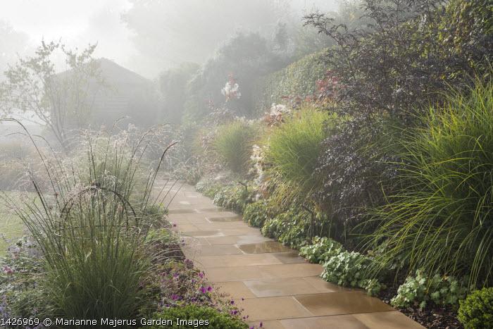 Stone path, Molinia caerulea subsp. arundinacea 'Transparent' , sambucus, Cotinus 'Grace', geraniums edging path