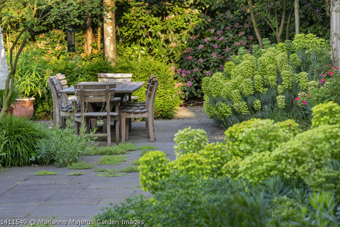 Wooden table and chairs on stone patio, Euphorbia characias subsp. wulfenii, thyme growing in paving cracks
