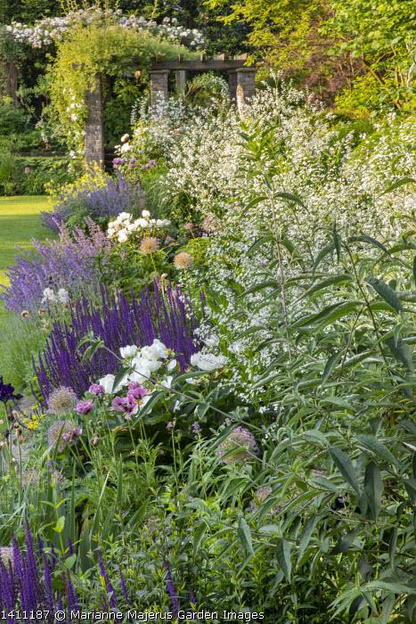 Crambe cordifolia, Nepeta racemosa 'Walker's Low', Salvia nemorosa 'Caradonna', Paeonia lactiflora 'Jan van Leeuwen', alliums, Papaver orientale 'Patty's Plum'