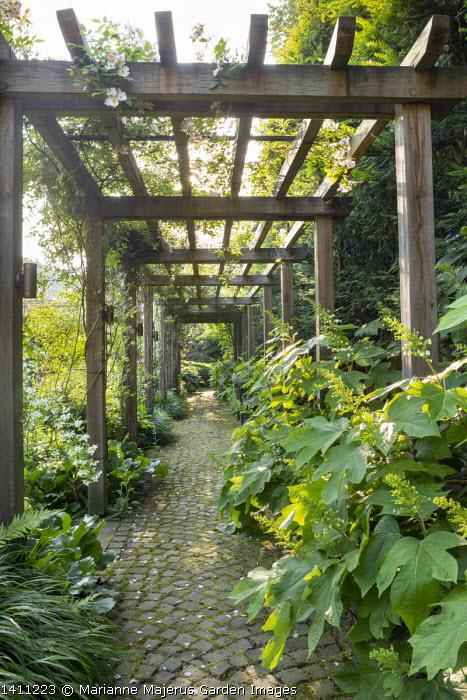 Path under wooden pergola, Hydrangea quercifolia