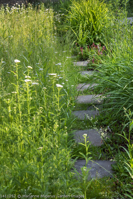 Stepping stone path through meadow, Achillea millefolium