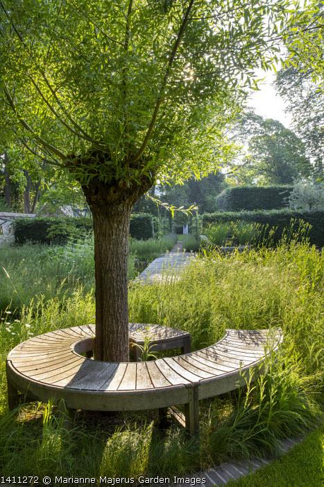 Spiral wooden bench by Gaze Burvill around pollarded willow tree, Achillea millefolium
