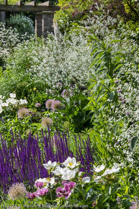 Crambe cordifolia, Paeonia lactiflora 'Jan van Leeuwen', Salvia nemorosa 'Caradonna', alliums, Papaver 'Patty's Plum'
