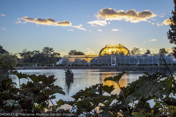 View across lake to Palm House, gunnera